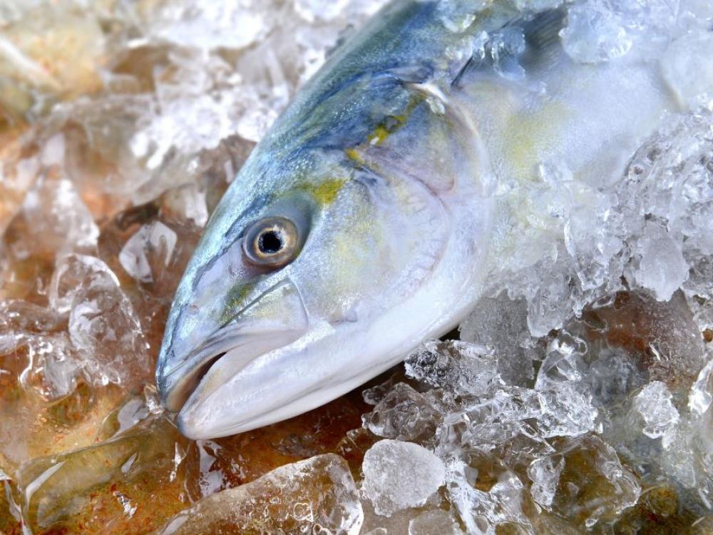 Kad žuvis būtų tikrai sveika