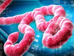 Parengtos Ebola karštligės prevencijos ir valdymo asmens sveikatos priežiūros įstaigose laikinosios gairės