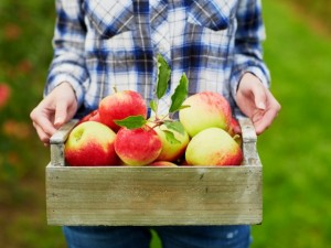 Obuolius ant pjedestalo!