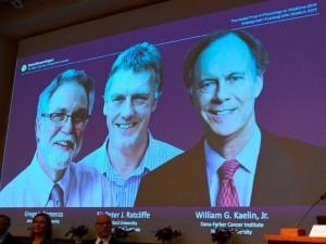 2019-ųjų Nobelio medicinos premija - dviem amerikiečiams ir britui