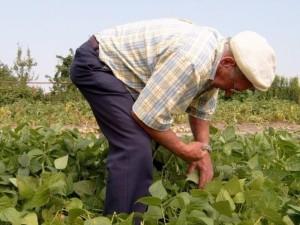 Kaip nuimti derlių nepakenkus nugarai