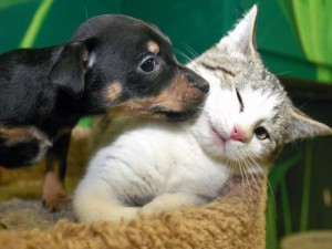 Pasaulinę gyvūnijos dieną – renginiai gyvūnams augintiniams ir jų šeimininkams