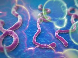 Čekijoje užfiksuotas galimas Ebolos atvejis