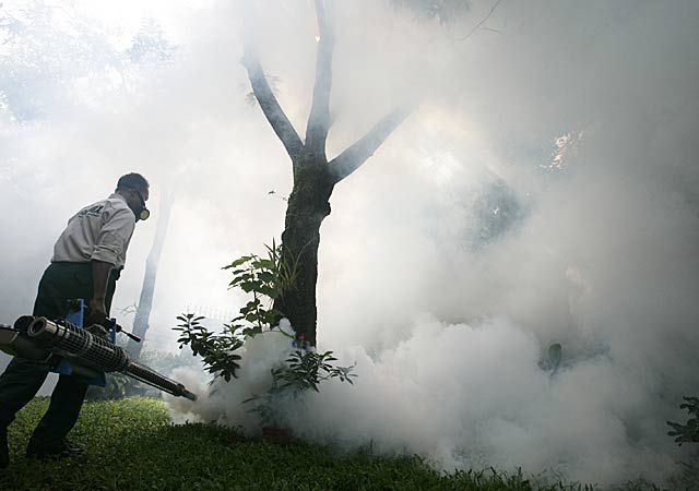 Ebolą keičia čikungunija?
