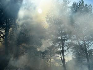 Kodėl Vilnius skendėjo smarvėje ir smoge?