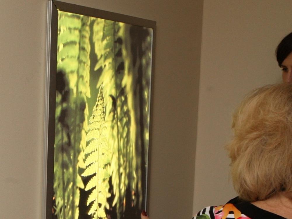 """""""Stirnų miškas"""" ir kiti gamtos motyvai Nacionaliniame vėžio institute"""