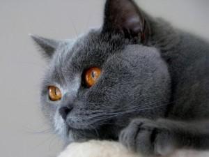 Katės mato, girdi ir jaučia tai, ko žmonių sąmonė tiesiog nefiksuoja