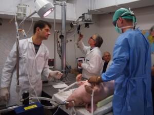 Eksperimentai su plakančia širdimi atskleidė ritmo sutrikimų priežastis