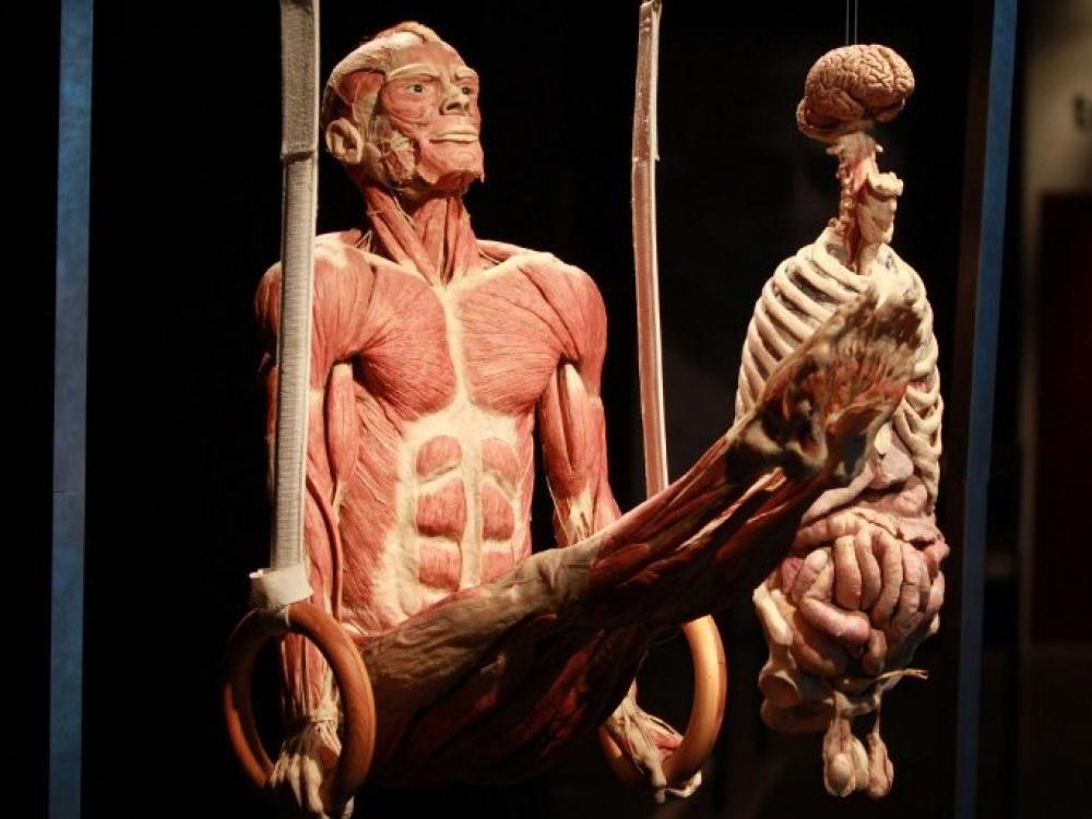 """Žmogaus kūno paslaptis atskleis """"Body Worlds Vital"""" paroda"""