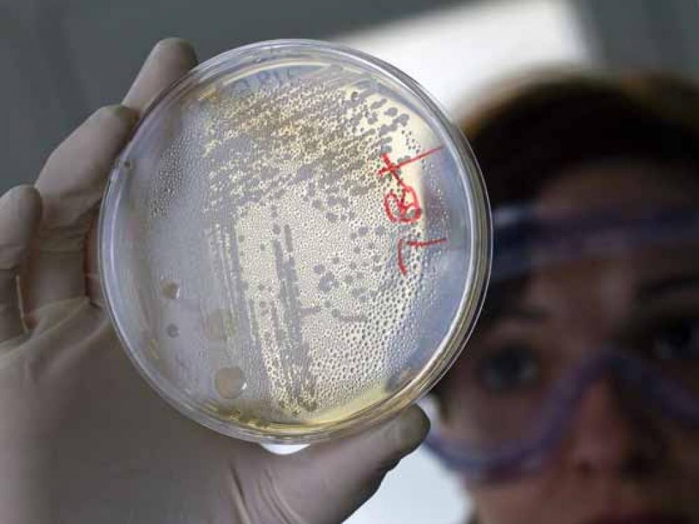 Bakterijos taps atminties kaupikliais