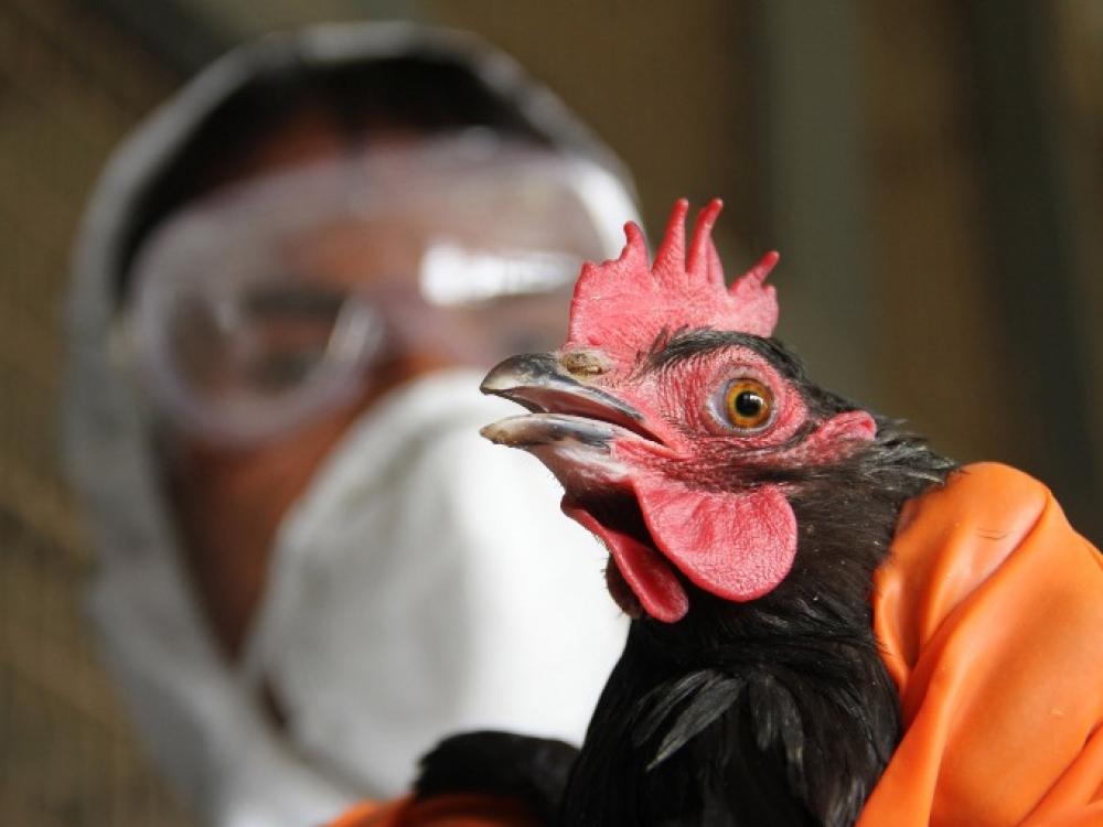 Pasaulyje daugėja žmonių susirgimų paukščių gripu