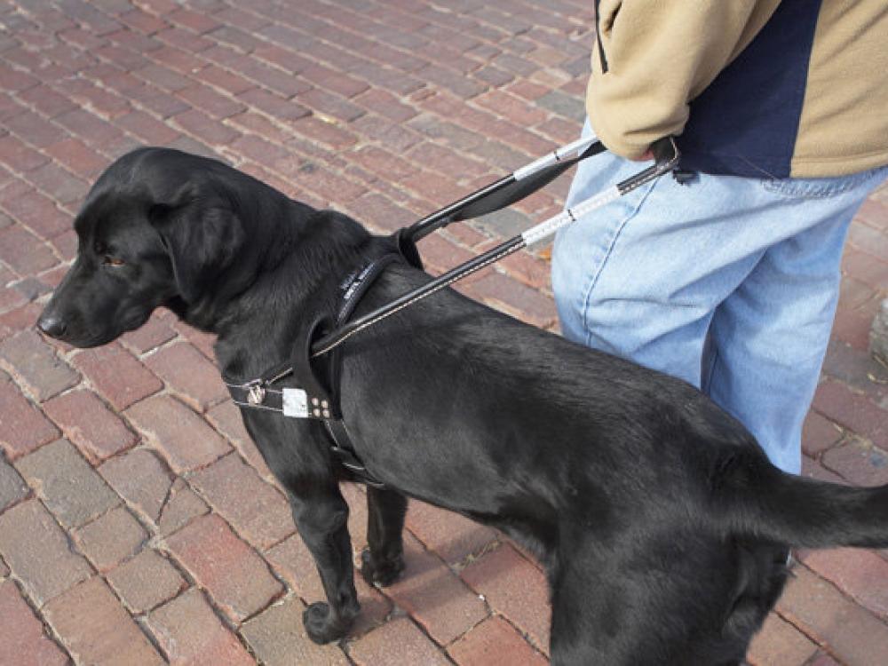 Lietuva vienintelė iš Baltijos šalių neturi šunų vedlių akliesiems
