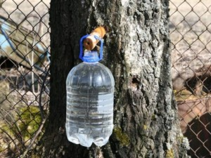 Sula – pavasario gamtos dovana žmonėms