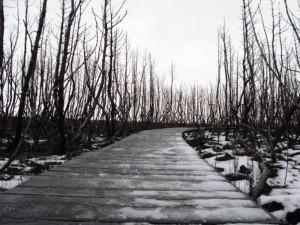 Prašoma uždrausti rūkyti Kuršių nerijos miškuose