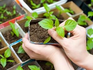 Svarbiausi pavasario darbai augalų augintojams