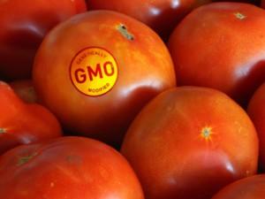 Ant maisto produktų – informacija apie GMO poveikį sveikatai