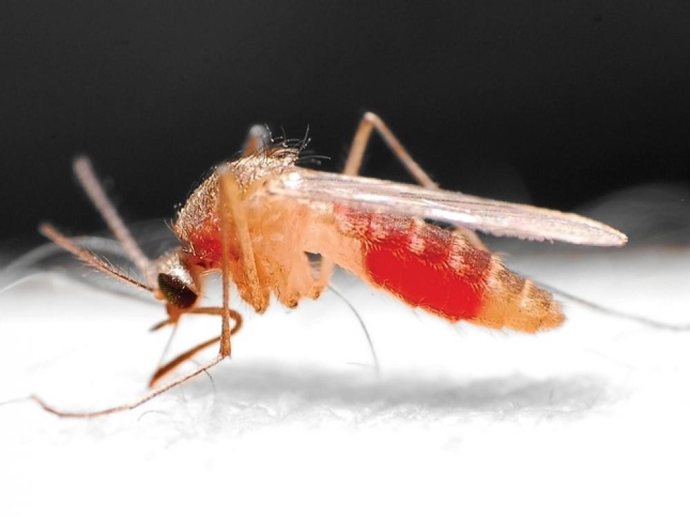 Sukurta vakcina nuo maliarijos rudenį turėtų pasiekti Afrikos vaikus