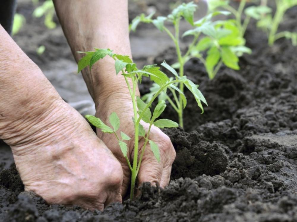 Kad darbas sode būtų saugus. Stabligės išvengsime pasiskiepiję