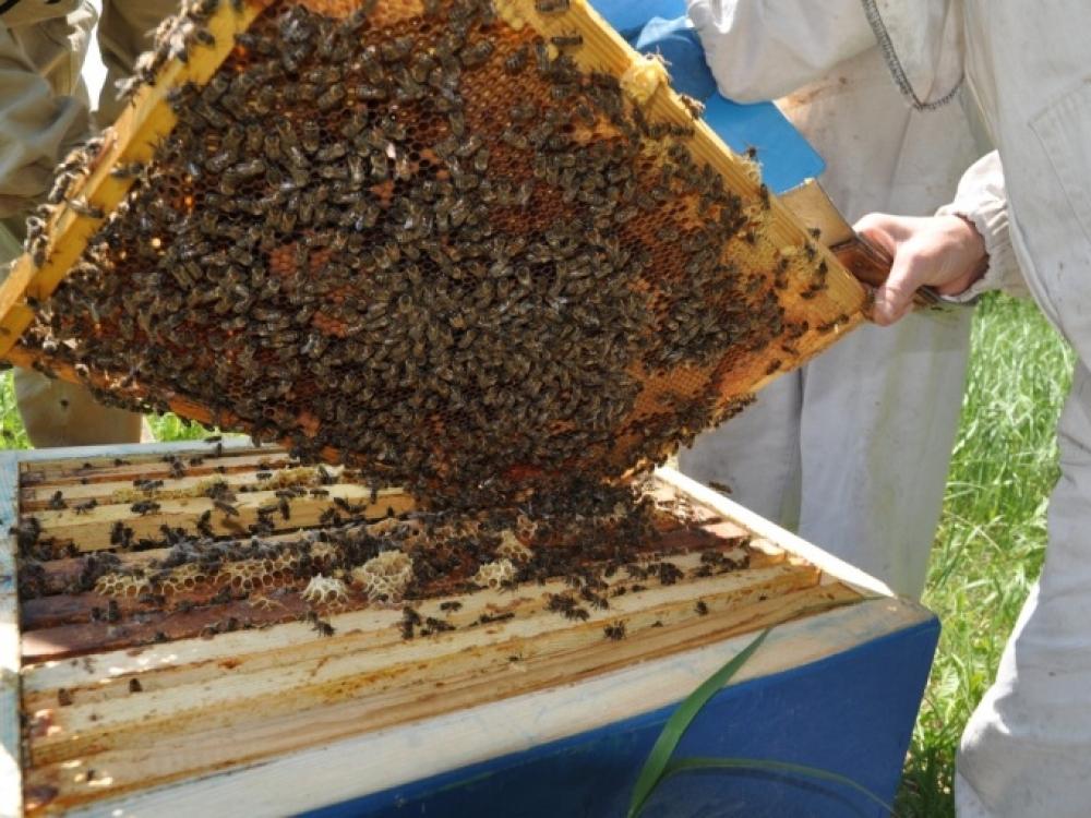 Pagal botaninę kilmę medus yra skirstomas į monoflorinį ir poliflorinį. Monoflorinis yra toks, kuriame vienos augalų rūšies žiedadulkių kiekis meduje yra didesnis nei 45 proc. Poliflorinis, kai meduje aptinkama įvairių augalų žiedadulkių.
