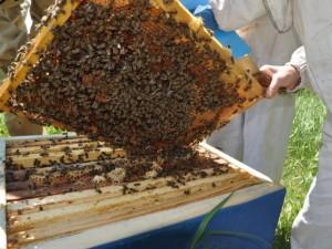 Specialistai: medus Lietuvoje yra geros kokybės produktas