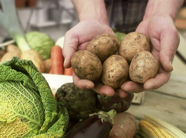 Sveikos daržovės: kaip nesuklysti renkantis