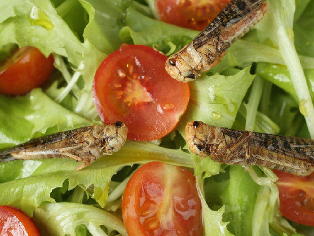 Kepti vabzdžiai užkariaus Europą?