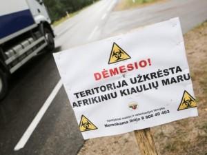 Afrikinio kiaulių maro virusą gali pernešti ir žmonės