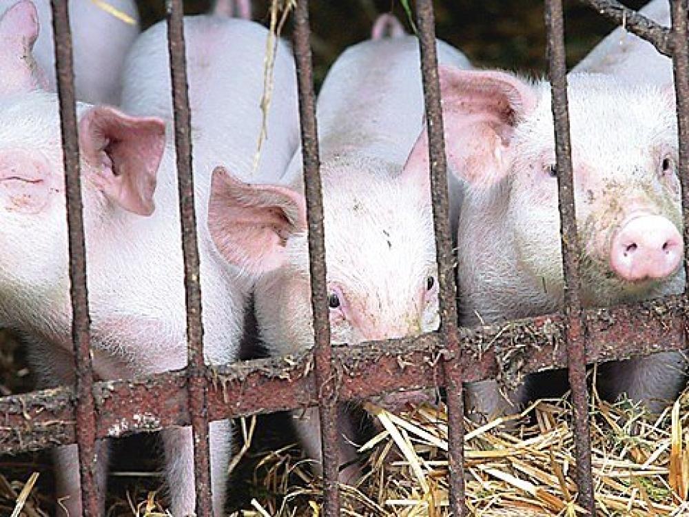 Finansiniai nuostoliai ūkininkams nesilaikantiems reikalavimų