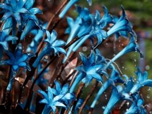 Karališkosios Čelsio ligoninės teritorijoje prasidėjo kasmetinė gėlių paroda