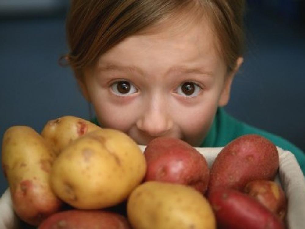 Ginčai dėl bulvių: vaikams geresnė lietuviška ar iš Egipto?