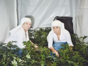 Kalifornijoje marihuaną augina net vienuolės