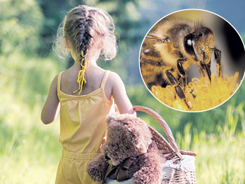 Į kurias kūno vietas bitė gelia skaudžiausiai? - LRT