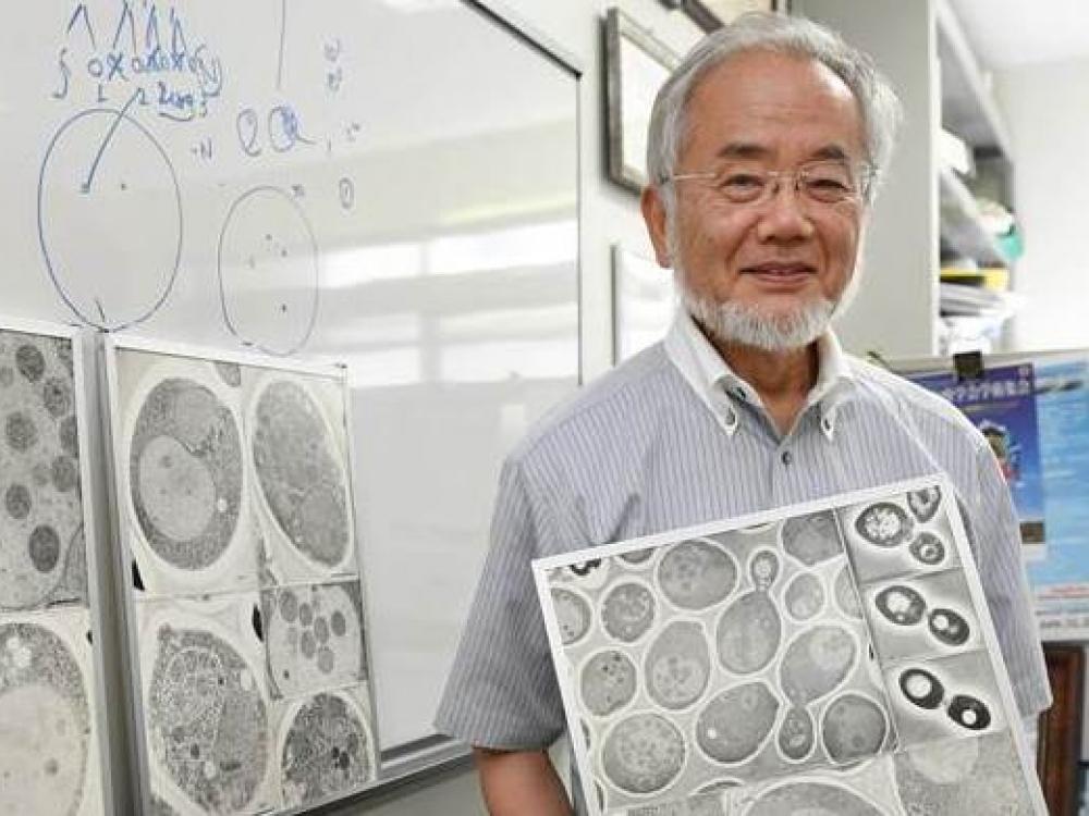Nobelio medicinos premija – japonui Yoshinori Ohsumi