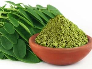 Aliejinė moringa: antioksidantų šaltinis