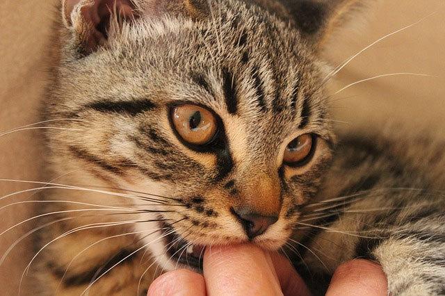 Katės gali būti kaltos dėl Alzheimerio ligos