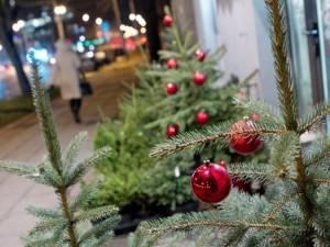 Miestuose surenkamos kalėdinės eglutės