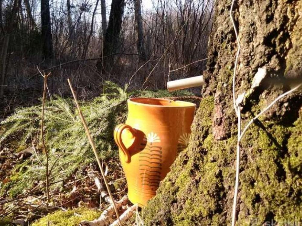 Sula: medžių dovana mums