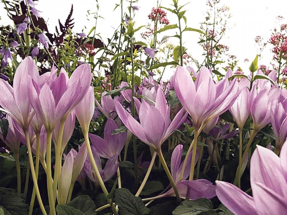 Mirtinai pavojingos gėlės