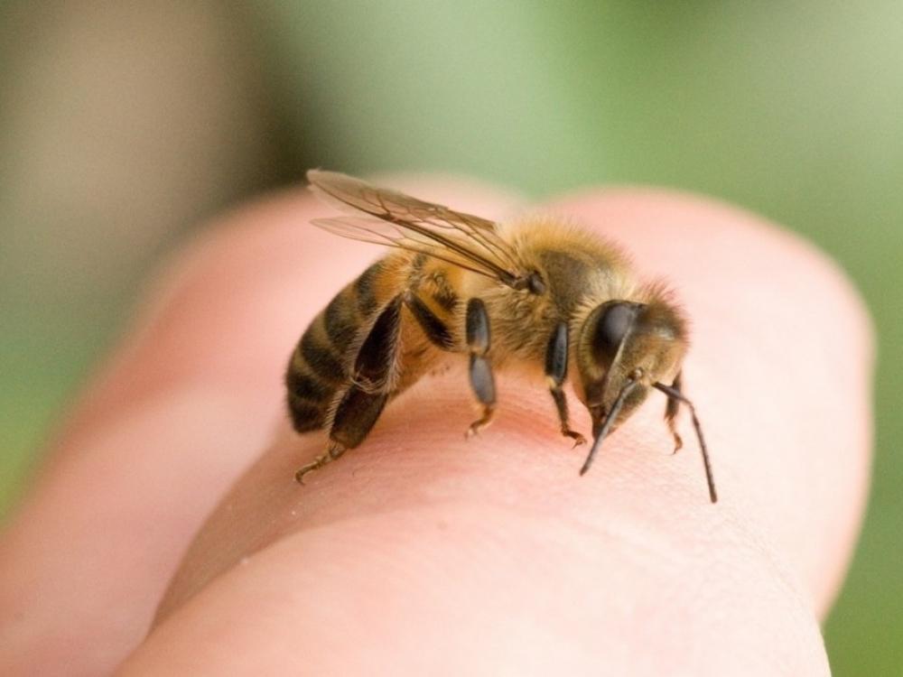 Atsargiai – puola vapsvos! Pirmoji pagalba vabzdžių sugeltiems vaikams