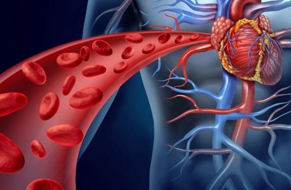 Koks jūsų kraujagyslių amžius?