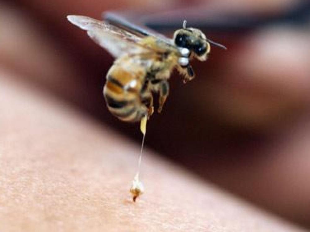 Vasaros vargai – geliantys vabzdžiai
